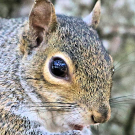 Tuesday At Zephyr Park 30 by Terry Saxby - Animals Other Mammals ( terry, florida, zephyrhills, saxby, nancy, usa, squirrel )