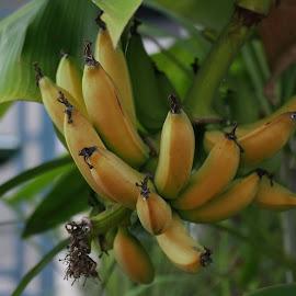 Banana by Kwoh LK - Nature Up Close Gardens & Produce