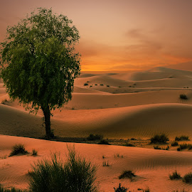 Desert's incomparable sense of space by Shabbir Shani - Landscapes Deserts ( life, desert, hdr, dubai, colors, sunsets, bestoftheday, uae, space, landscape )