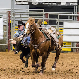 Rodeo Night in Texas by Christopher Winston - Sports & Fitness Rodeo/Bull Riding ( cowboy, skill, horse, sport, animal, competition )