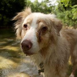 Kindle by Megan Donovan - Animals - Dogs Portraits