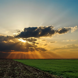Raining Rays by Luci Marin - Landscapes Sunsets & Sunrises ( wheat, field, ray, green, sunset, land, ray of light, high contrast, landscape, rays )