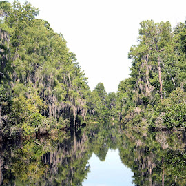 Okefenokee Swamp by Jackie Eatinger - Landscapes Waterscapes ( georgia, swamp,  )
