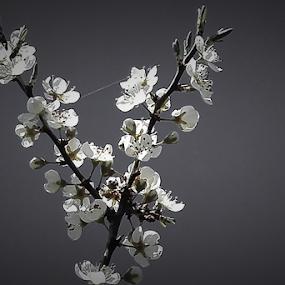 květy by Dasa Augustinova - Uncategorized All Uncategorized
