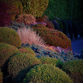 hedges by Lavonne Ripley - Nature Up Close Trees & Bushes