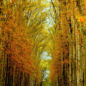 Autumn Trees by Rebecca Pollard - Nature Up Close Trees & Bushes (  )