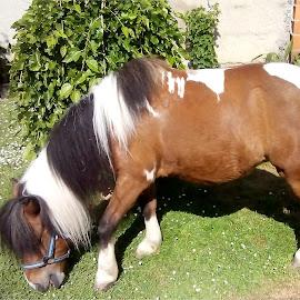 by Andrija Rečić - Animals Horses