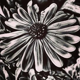 Beauty by Roxanne Dean - Digital Art Things