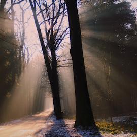 by Arjo van Timmeren - City,  Street & Park  City Parks ( fog, sunset, trees, sunshine, forest,  )