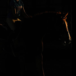 Jaran Abang by Claire McManus - Animals Horses ( red, riding, silhouette, horse, sundown, minimal, thoroughbred, mood factory, color, lighting, moods, colorful, light, bulbs, mood-lites )