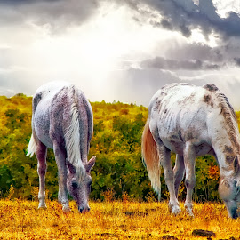 Mountain Pasture by Bruce Newman - Animals Horses ( anamils, nature, horses, beautiful landscape, colorful, dramatic sly,  )