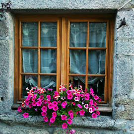 Window by Dobrin Anca - Buildings & Architecture Other Exteriors ( wood, window, street, brittany, flower )