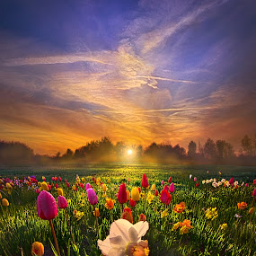 Wherever The Journey Takes Us by Phil Koch - Landscapes Prairies, Meadows & Fields ( vertical, farmland, yellow, leaves, love, sky, tree, nature, weather, perspective, flowers, light, orange, twilight, art, agriculture, horizon, portrait, environment, dawn, season, serene, trees, lines, inspirational, wisconsin, natural light, daffodlils, ray, beauty, tulips, landscape, phil koch, spring, sun, photography, farm, life, horizons, inspired, clouds, office, park, beautiful, scenic, morning, shadows, field, red, blue, sunset, amber, peace, meadow, summer, beam, earth, sunrise, garden,  )