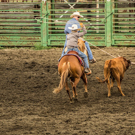 Richardton's Little Opry Land by Julie Wooden - Sports & Fitness Rodeo/Bull Riding ( stormy, games, ropers, animals, north dakota, horses, richardton's little opry land, stormy sky, rodeo, children, richardton, kids, summer fun, families, cows, entertainment, team ropers, goats, rodeo grounds, food, event, outdoors, water slide, summer, scenery, vendors, dance, barrel riders )