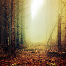 20141026-DSC_3821 by Zsolt Zsigmond - Landscapes Forests ( fog, trees, forest, woods, misty, mist )