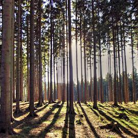 by Jan Tlustý - Landscapes Forests