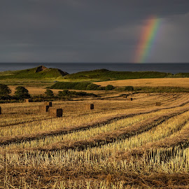 Northumberland Coast by Nigel Bowsher - Landscapes Prairies, Meadows & Fields ( sea rainbow harvest field )