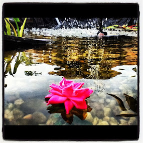Flower by Brennan Adamus - Instagram & Mobile Other (  )