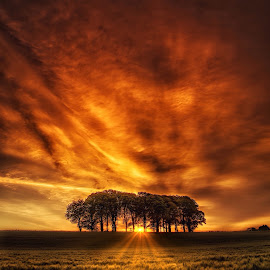 Sky on fire by Kieran O Mahony  - Landscapes Sunsets & Sunrises ( field, ray's, colour, sky, tree, color, sunset, trees, sunrise, landscape, sun, fire )