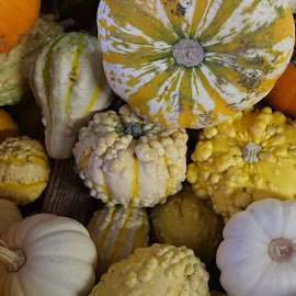 gourd by Terrance King - Food & Drink Fruits & Vegetables ( eatable, gourd, orange, vegg, pumpkin, yellow gree, veggie, natural, garden )