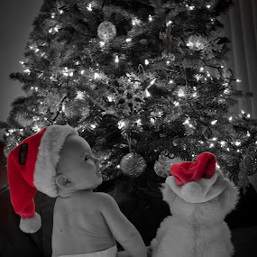 Best Buds by Kenneth Glazebrook - Babies & Children Babies ( santa, teddy bear, curren, christmas, christmas tree, santa hat, hat )