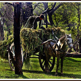 Jungle Life by Mohsan Haidry - Animals Horses ( hdr, nature, jungle, green, horse, trip, boy )