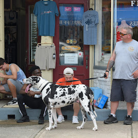 Big Dog  by Lorraine D.  Heaney - People Street & Candids