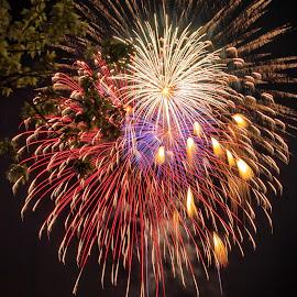 Fireworks by Carol Ward - Public Holidays July 4th ( holiday, alexandria va, park, oronocao bay park, 4th of july, fireworks,  )