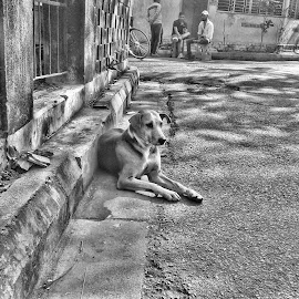 dejected by Neil Mukhopadhyay - Instagram & Mobile Android