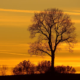 by Cyndi Wiesneski - Landscapes Sunsets & Sunrises