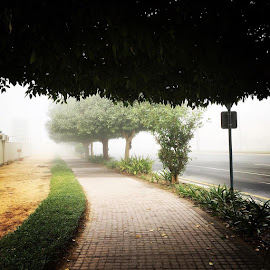 Foggy morning in Dubai, UAE by Anita Louise - Landscapes Weather