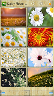 Daisy Flower Wallpapers - screenshot