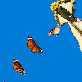 Butterfly composite by Jess van Putten - Digital Art Animals ( orange, flying, butterfly, blue sky, insect )