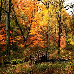 Fall in Bowen Park by Nancy Tonkin - City,  Street & Park  City Parks (  )