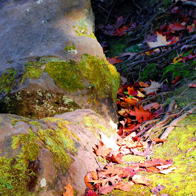 A Rolling Stone Gathers No Moss by Charles Shope - Landscapes Mountains & Hills ( outdoor, moss, rock, leaves )