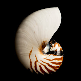 From the Deep by Russell Mander - Abstract Macro ( sea water, colour, shell, deep water, sea )