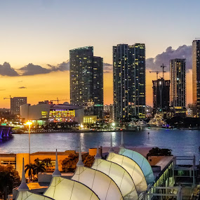 Miami nigts by Albin Bezjak - City,  Street & Park  Night