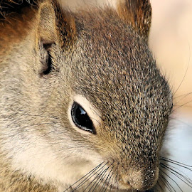Saturdays Best 48 by Terry Saxby - Animals Other Mammals ( canada, terry, goderich, ontario, saxby, nancy, squirrel )
