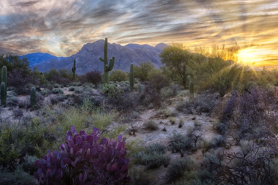 Tucson This Morning by Charlie Alolkoy - Landscapes Deserts ( sunset, arizona, tucson )