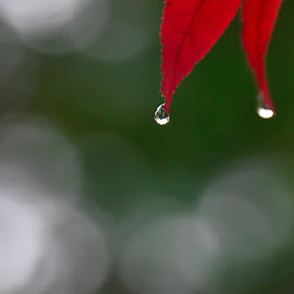 Autumn  by Angela Taya - Nature Up Close Natural Waterdrops