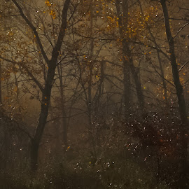 The Woods by William Boyea - Nature Up Close Trees & Bushes ( fall colors, fog, trees, woods, moonlight, mist )