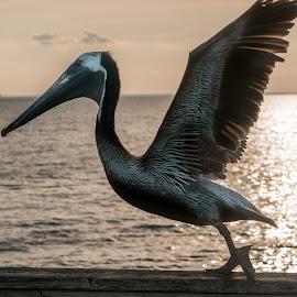 by Victor Martin - Animals Birds