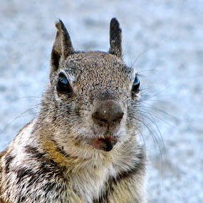 Faces Tell Stories  by Emily Jones - Animals Other ( hurt, sad, brown, cute, squirrel )