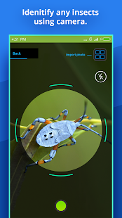 Insect Identifier Screenshot