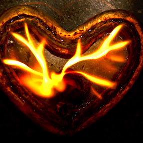 Anger and Heart by Dibyendu Banik - Novices Only Objects & Still Life ( rose, heart, anger, passion, fire )
