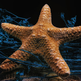 Star Fish Top by Dave Walters - Nature Up Close Other Natural Objects ( sea shell, star fish, nature, colors, artistic )