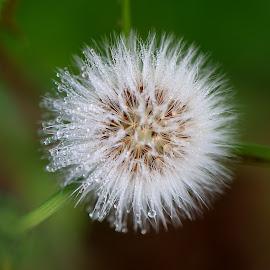 by Helena Jirasová - Nature Up Close Natural Waterdrops ( dew )