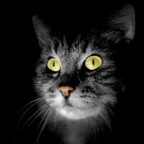 Dark room by Jurijs Ratanins - Animals - Cats Portraits ( mobilography, cat )