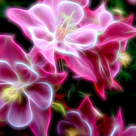 Columbine Aglow by Millieanne T - Digital Art Abstract