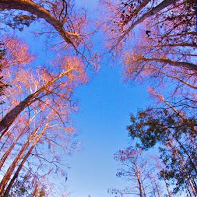 Everglades 104 by Chris Wilson - Landscapes Prairies, Meadows & Fields ( water, nature, florida, everglades, trees, landscape, swamp )